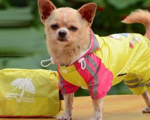 Dog Hooded Raincoat